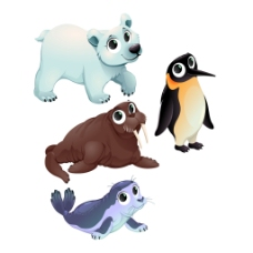 一组北极南极动物
