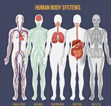 5款彩绘人体系统矢量素材