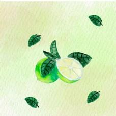 手绘水彩青柠檬插图
