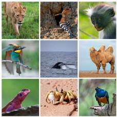 野生动物摄影图片