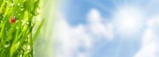 露珠绿叶背景图片