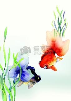 兩條對視的金魚