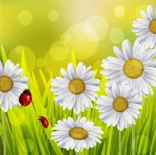 矢量植物花